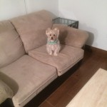 Milpitas-Sofa-Pet-Stain-Cleaning