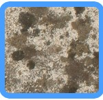 Water-Mold-Removal-Milpitas